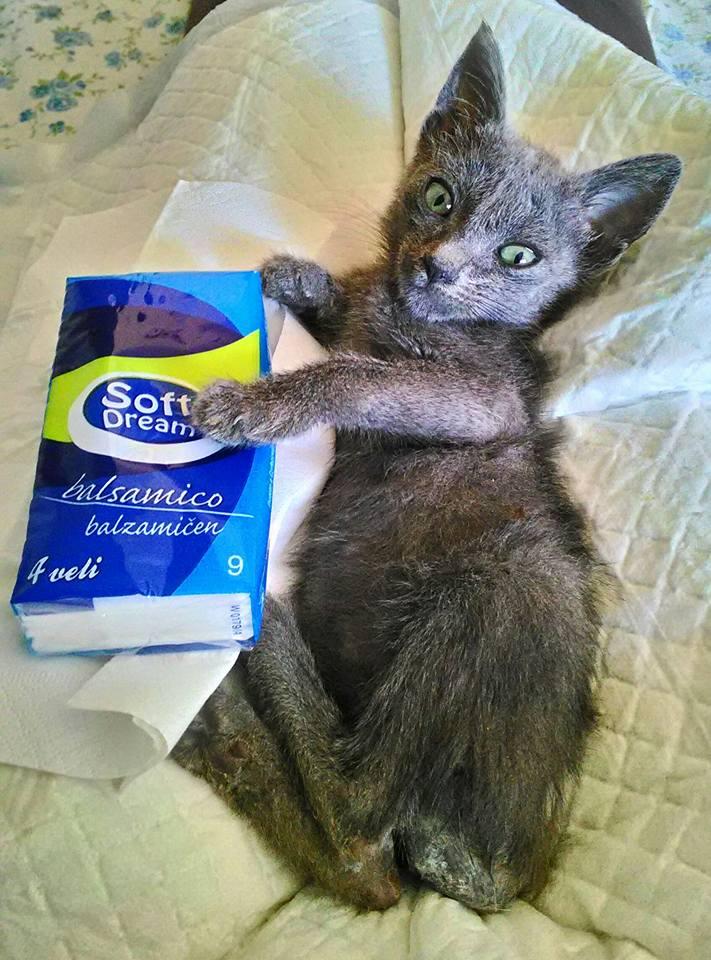 Skip To Content Cat Home Chi Siamo Cosa Facciamo Adozioni